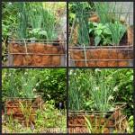 DIY Milk Crate Garden