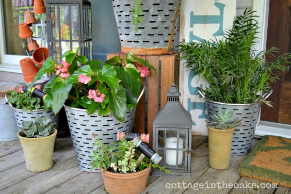 Plants in vintage olive buckets
