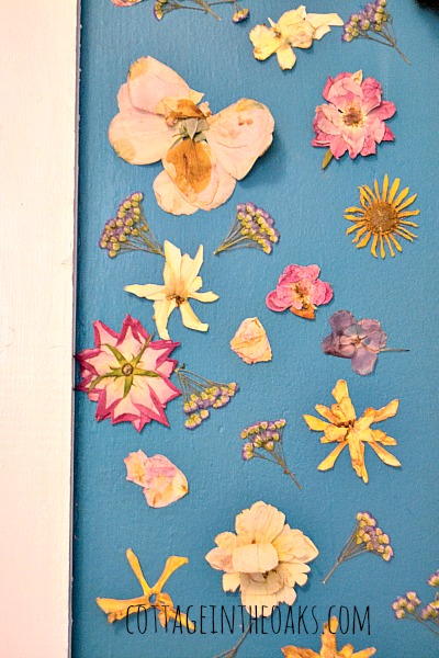 pressed flowers on wall