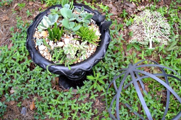 Succulents planted in a broken birdbath